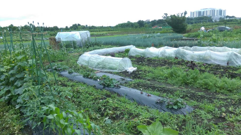 雑草対策と畝方向切替え